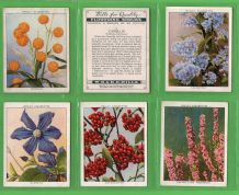 Tobacco cards set  cigarette cards Flowering Shrubs 1934